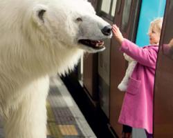 Polar-bear-on-the-circle-line
