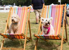 The View wins DogFest 2018 festivals brief