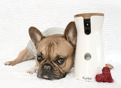 Furbo appoints Clarion